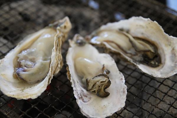 糸島 牡蠣